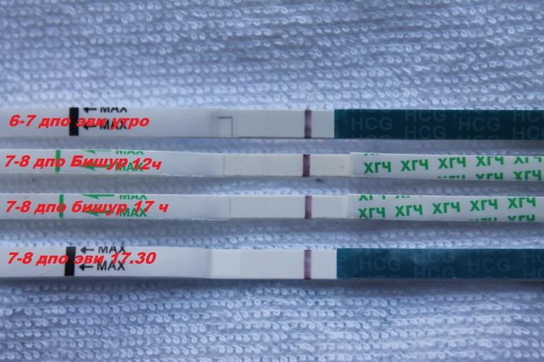 Фото тест на беременность 8 дпо