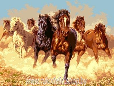 Мои  кони