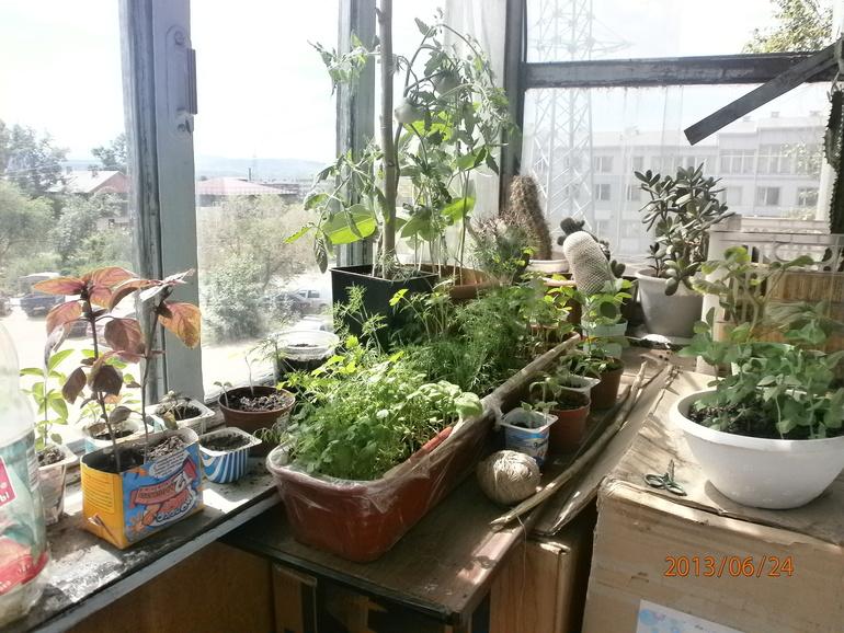 Огородик на балконе. нужны советы! - запись пользователя эмф.