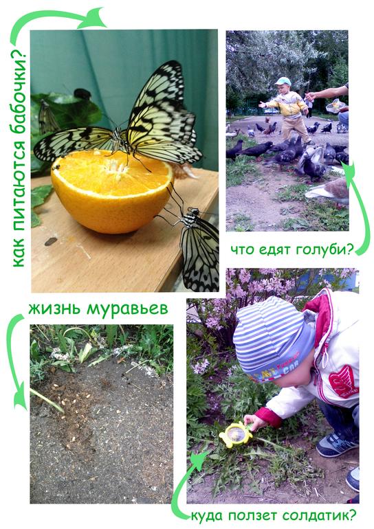 насекомые их знакомые 2