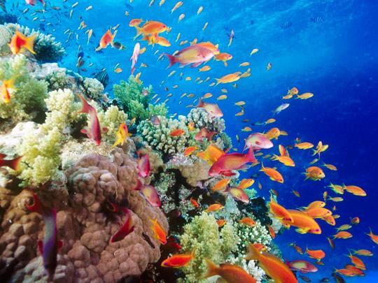 Кораллы в морях создают