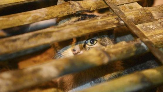Москвички, поддержите Создание службы по спасению бездомных кошек