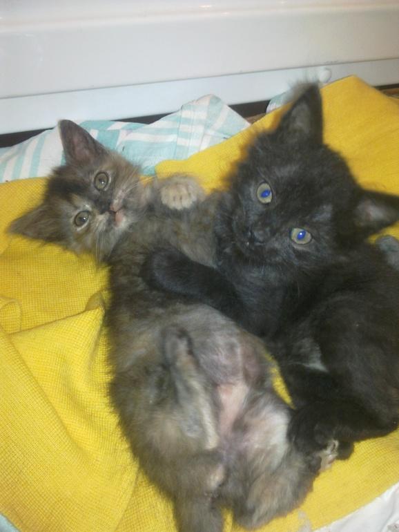 Ласковые сироты -котята ищут дом.