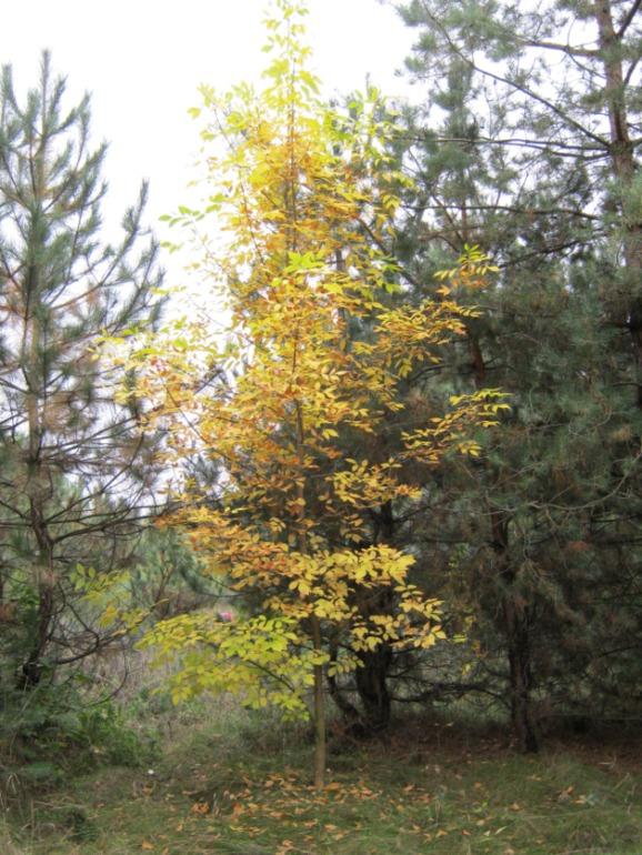 Рекострукция боевых действий+лес