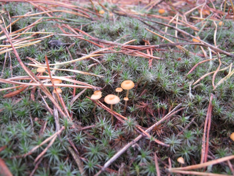 Фото охота на грибы