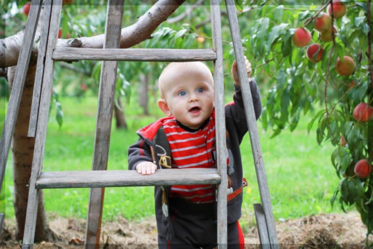 На  фруктовой  ферме