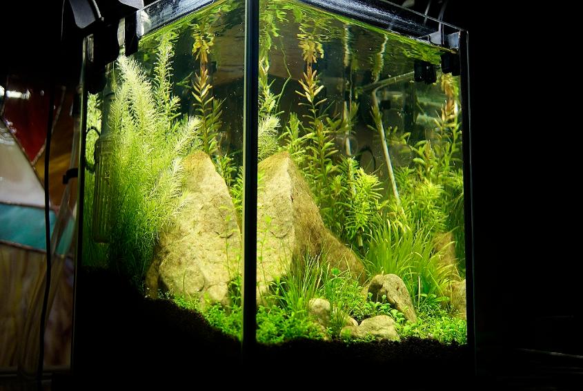 Какие растения можно посадить в аквариум - описание с фото 55