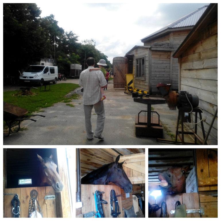 Встреча с лошадками. 32 день в Укриане.