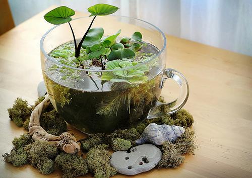 Растения для дома своими руками