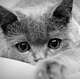 Черно-белый кот на бревнах без смс